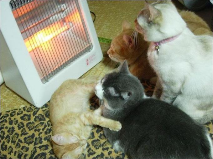 生病好冷动物图片