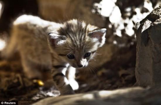 可爱的猫科动物勒?