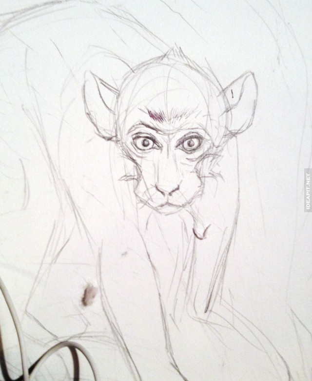 画素描猴子的步骤